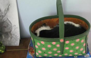 Kenny in a Basket by maria joy