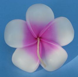 Frangipan Floating Flower Candles - Pink