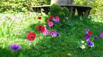 tree seat, anemonies and cyclamens - maria joy