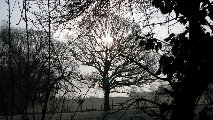 Tree, frosty early spring morning - m.joy
