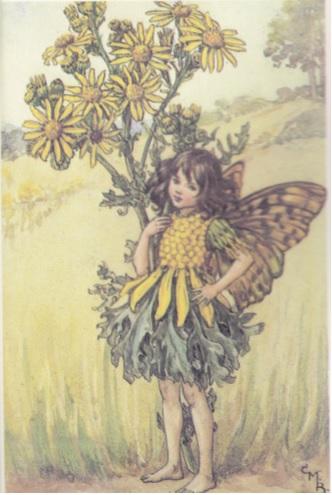 ragwort fairy - cicely mary barker