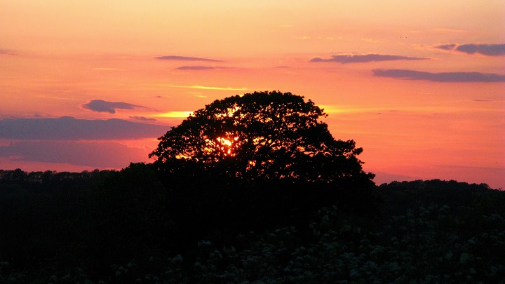 Cow Parsley, Sunset - m.joy