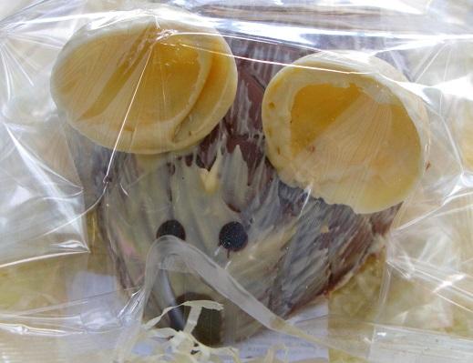 Chocolate Mouse - Rainbow Organic Chocolates - Brighton Open Market - m.joy