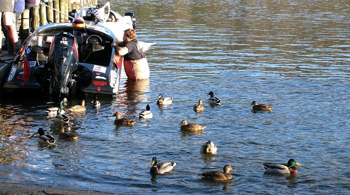 Starboard, circling ducks - m.joy