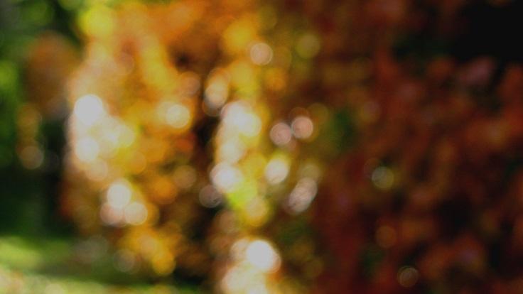 Autumn - m.joy