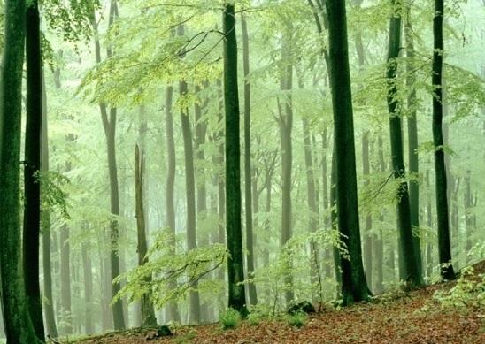 Eifel Park - Corinna Heer