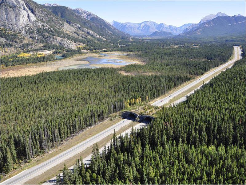 banff-national-park-alberta-animal-bridge-overpass-wildlife-crossing