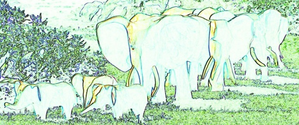 Small Woolly Elephant - m.joy