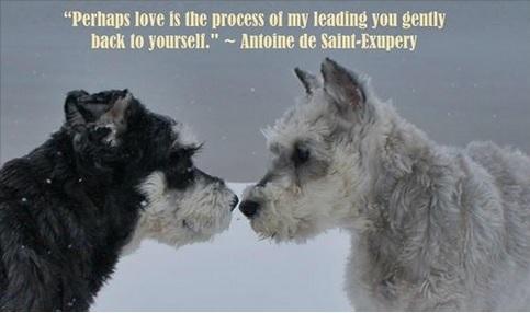 Love - Following Atticus