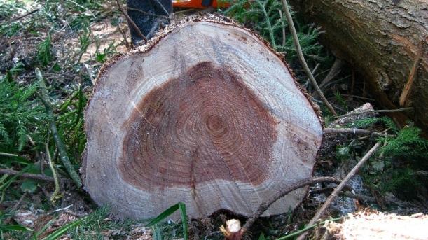 Cypress tree - m.joy