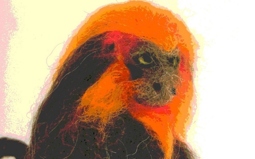 Golden Lion Tamarin Monkey - m.joy