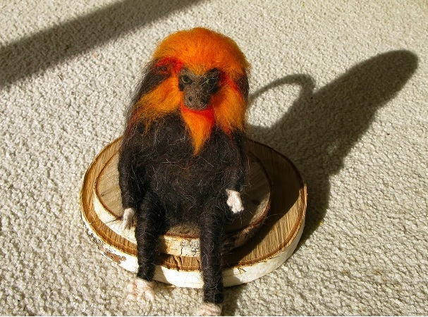 Golden Lion Tamarin - m.joy