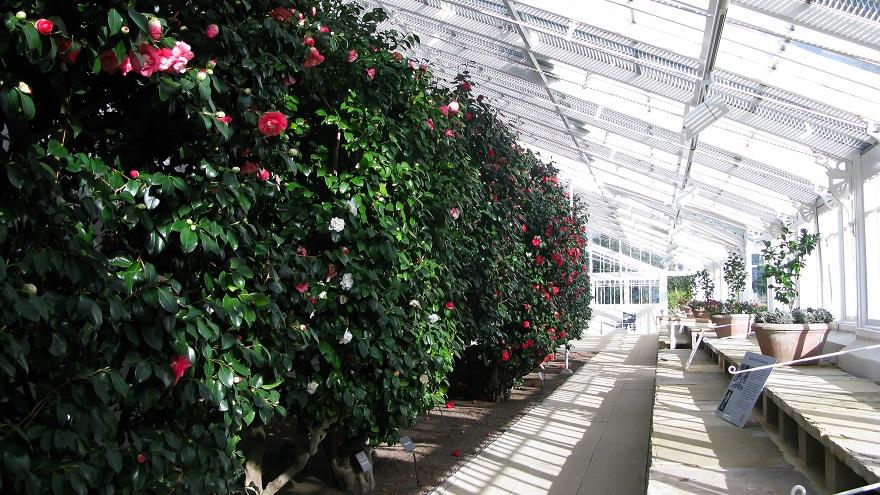 Conservatory - m.joy