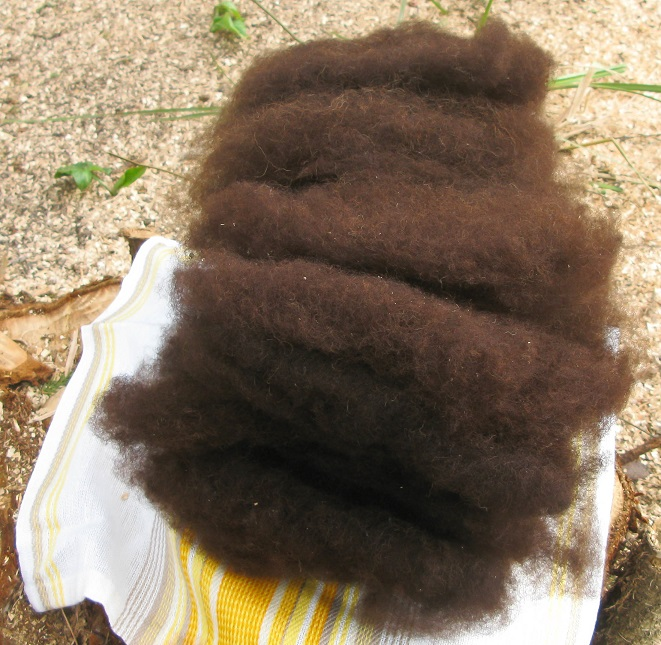 Handcarded Zwartble Wool from smallwoollyelephant