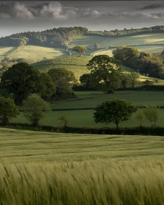 Lone tree. Rolling hills of Mid Devon by Simon Ward - 2015