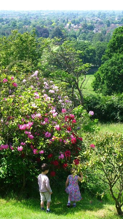 View from Pembroke Lodge - m.joy