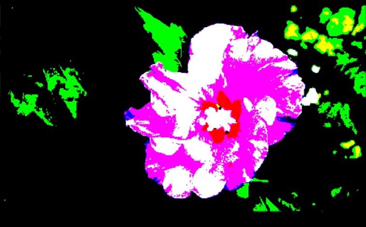 Purple Hibiscus - m.joy