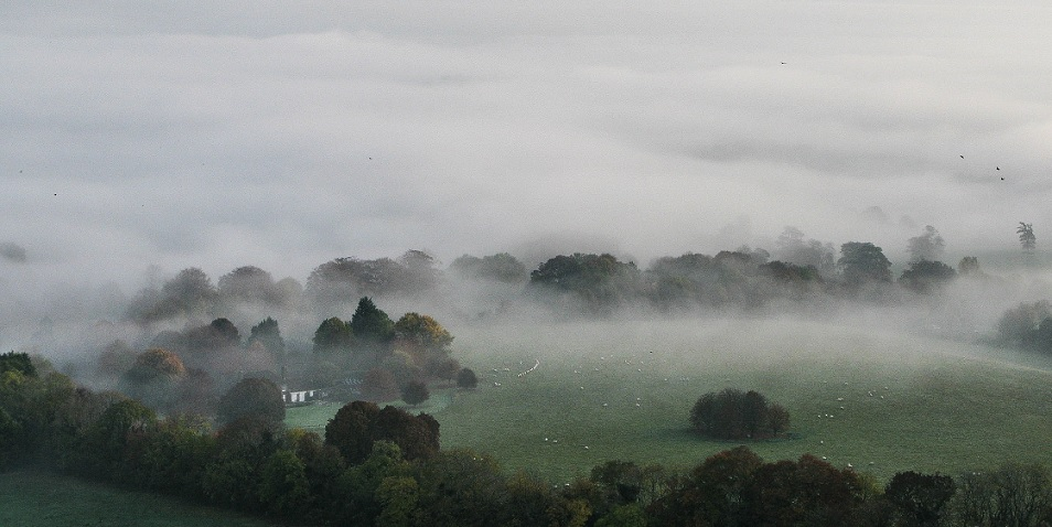 Hidden in the Mist - m.joy