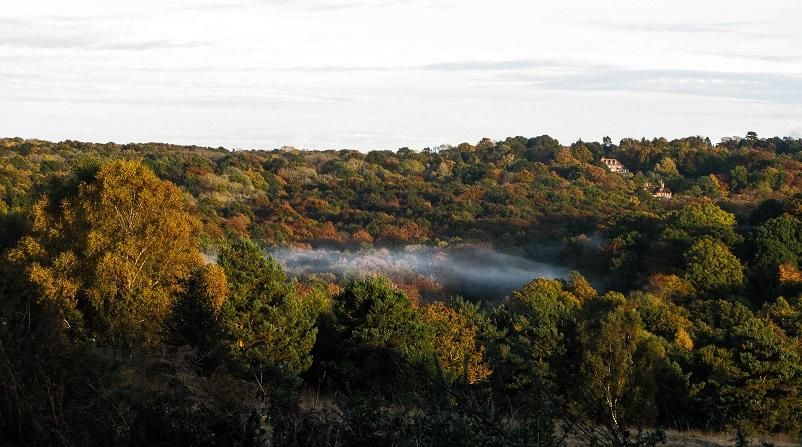 Halloween Autumn Mist - m.joy