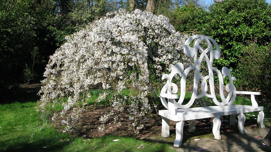 Nymans, Magnolias and A Bench - maria joy