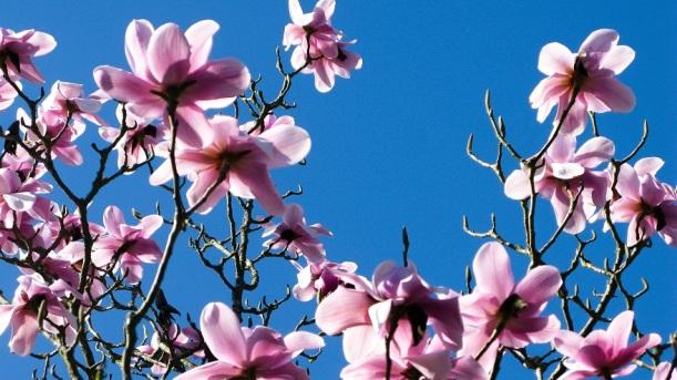 Spring - m.joy