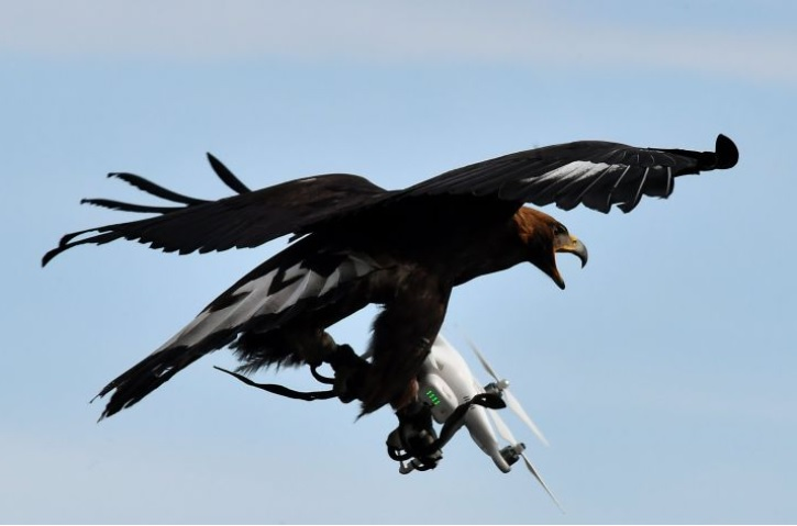 Royal Eagle intercepts Drone - AFP Getty Images